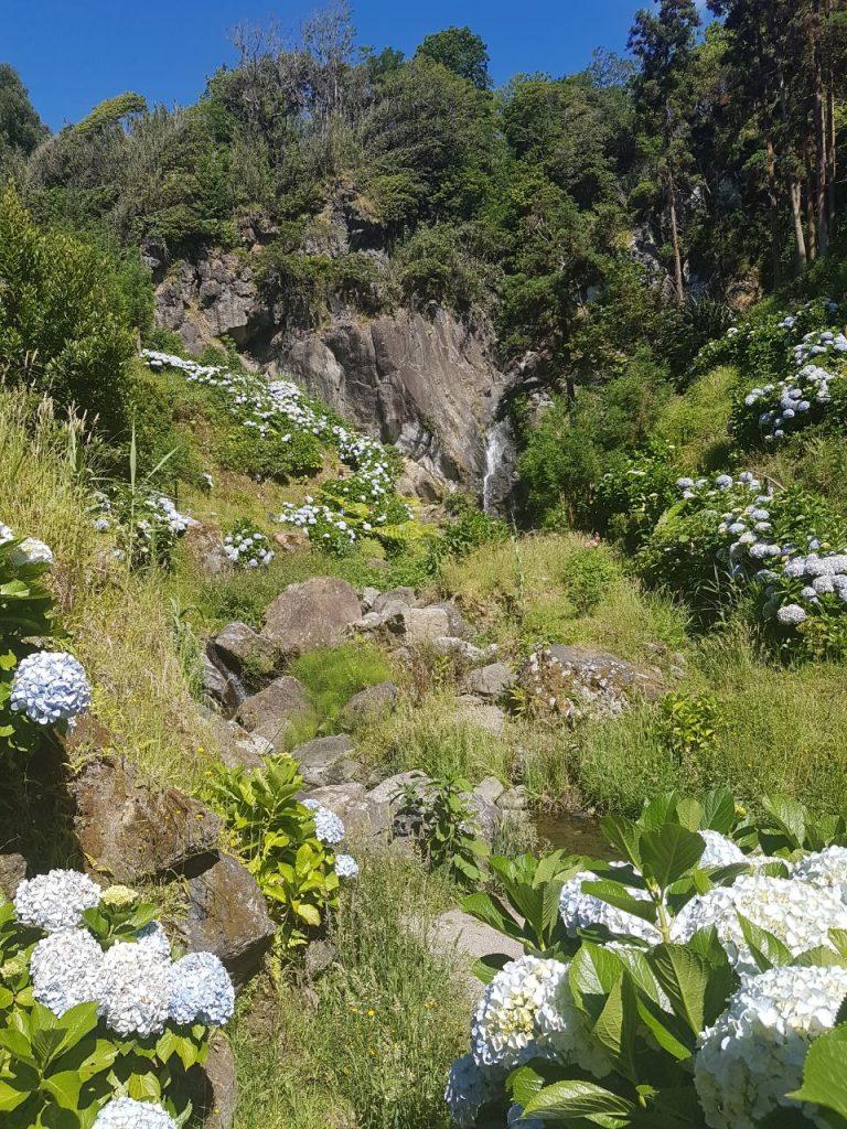 ... Wenn Die Hortensienhecken Am Weges  Oder Feldrandrand In Voller Blüte  Stehen. Mit Und Ohne Schmucklilien Davor Immer Wieder Unglaublich Schöne  Blicke.